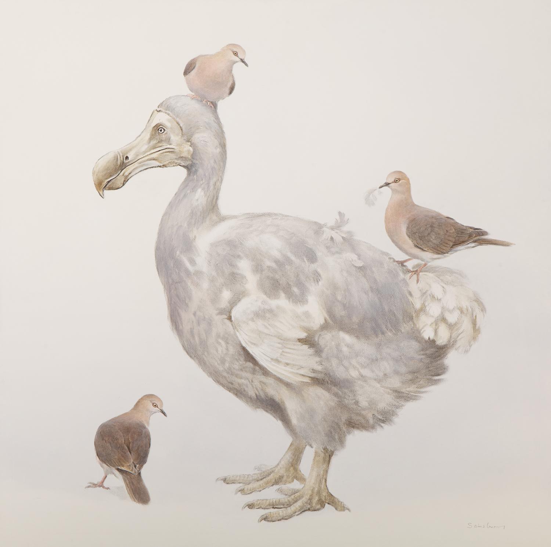 Dodo and Grenada Doves