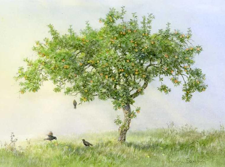Apple tree and Blackbirds