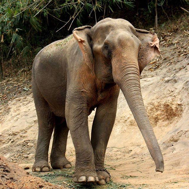 elephant 2-016e7e6a