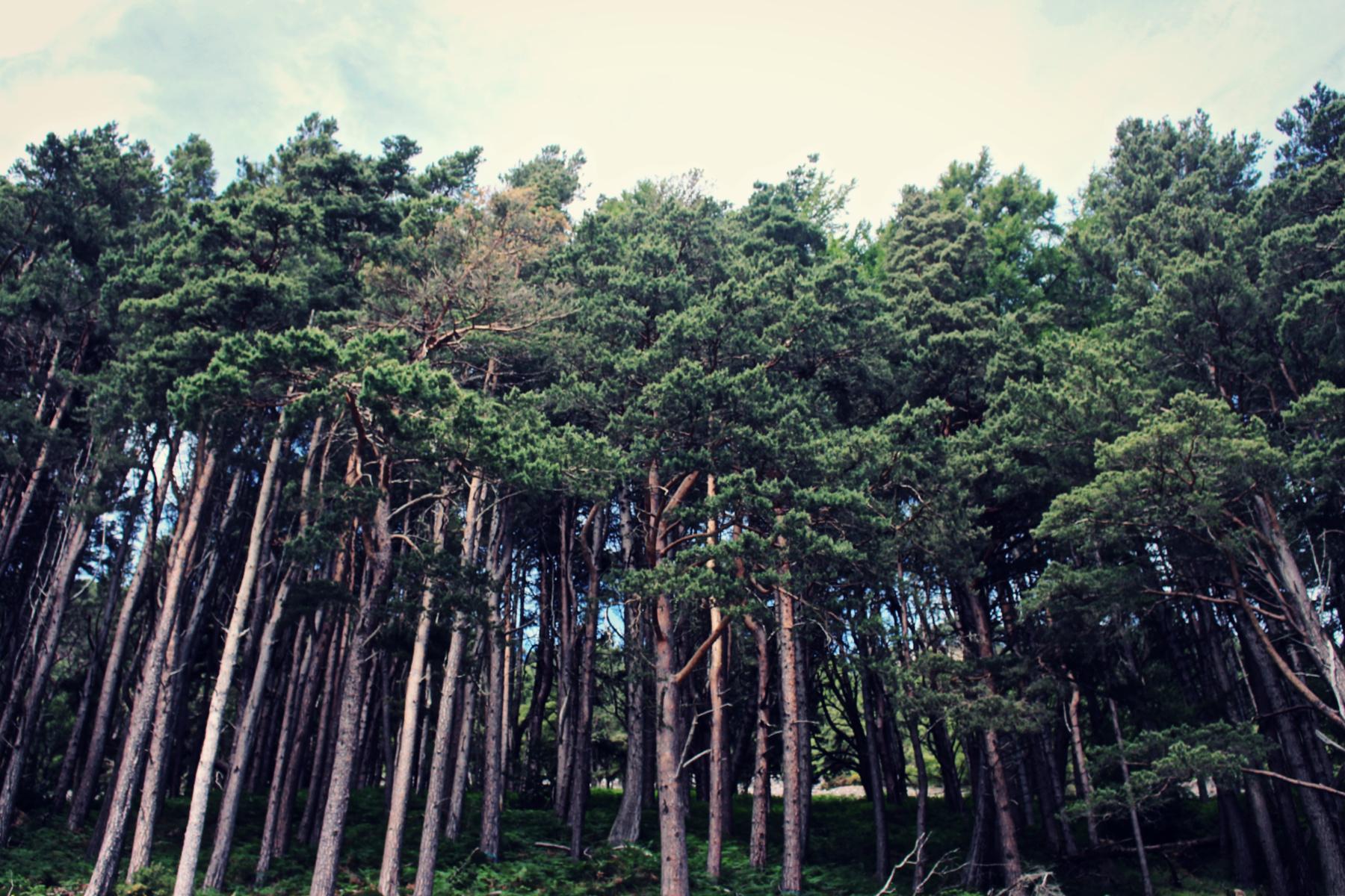 Trees Loch Ness-6b20f0b9
